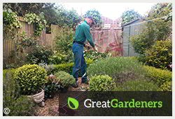 Reliable Leaf Clearance for Your Oxford OX1 Garden